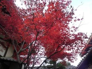 2012.11 紅葉.jpg